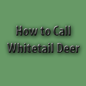 How to Call Whitetail Deer - Sean's Outdoor Adventures