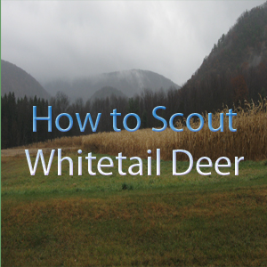 How to Scout Whitetail Deer - Sean's Outdoor Adventures